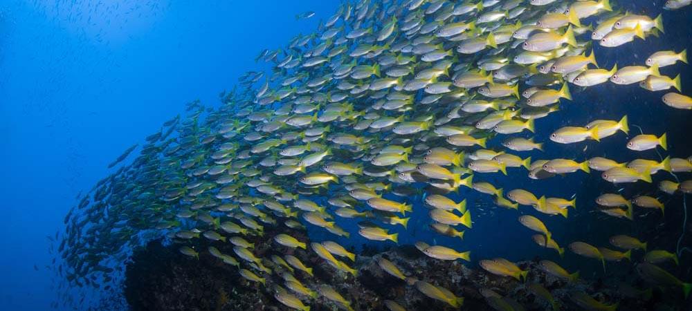 Chart-Room-b-change-fish